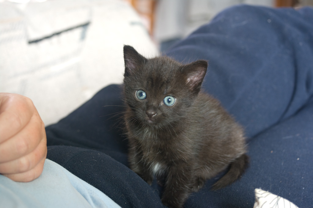 cat in cinderella